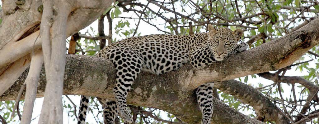 Jocky Tours & Safaris - Kenya & Tanzania Camping Safaris | Budget
